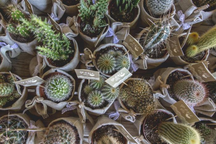 palettine per piante