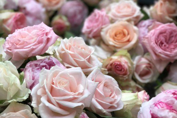 Le migliori Rose