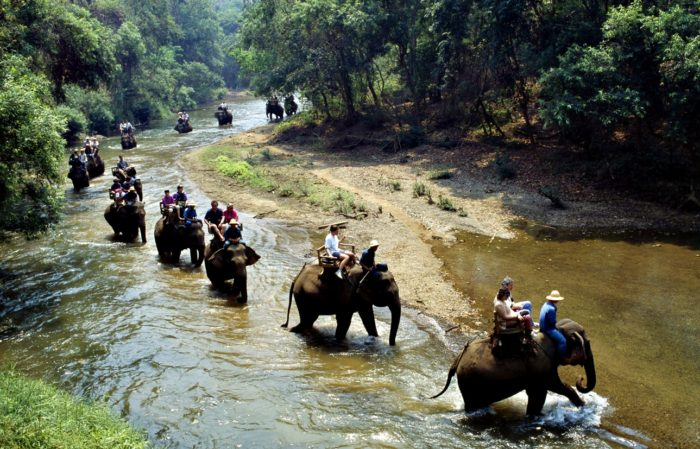 Passeggiata con Elefanti