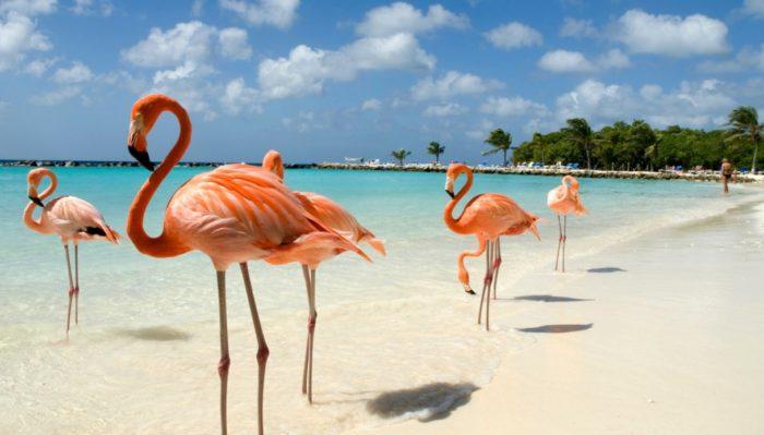 Aruba, spiagge meravigloiose