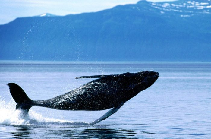 Balene in Nuova Zelanda
