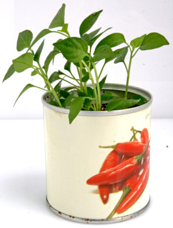 Peperoncino Fiori in Lattina