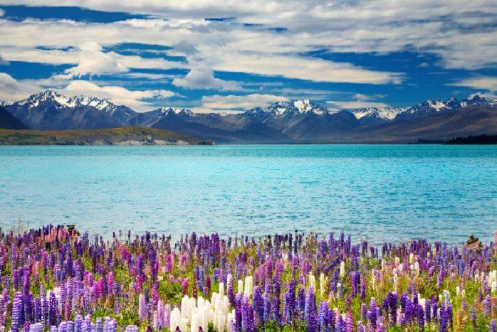 Nuova Zelanda - Lago di Tepako
