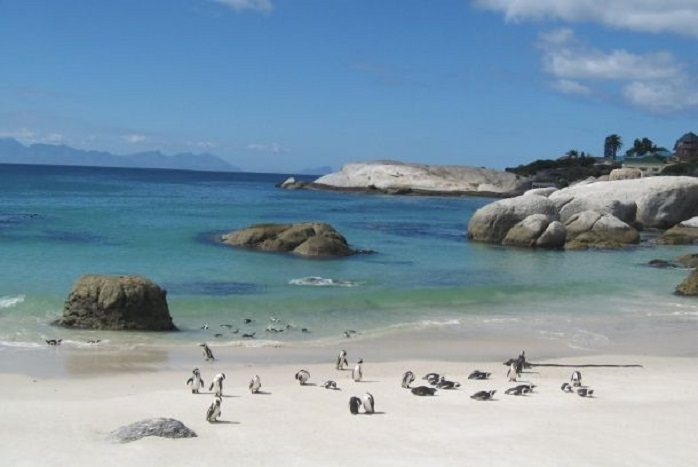 Sudafrica - Boulders Beach