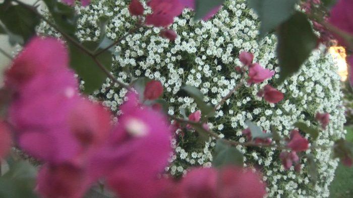 Horse country fiori