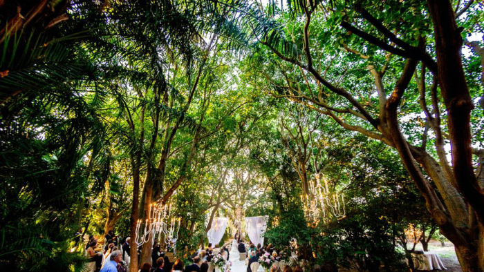 Matrimonio sugli alberi