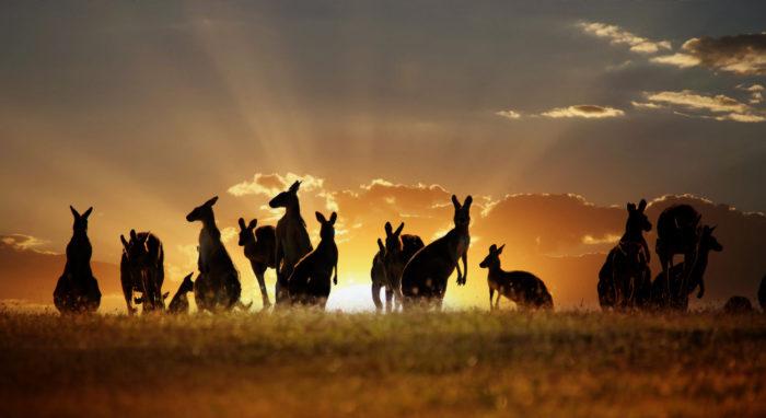 Africa e Safari