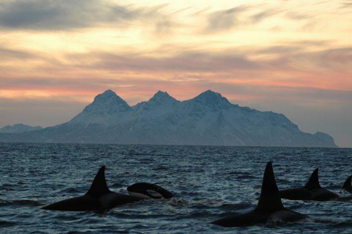 Safari Balena