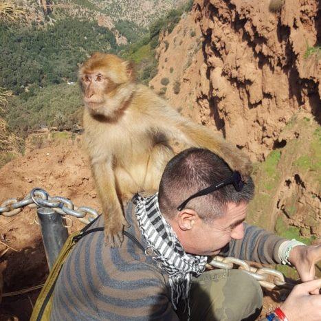 Scimmietta ladra