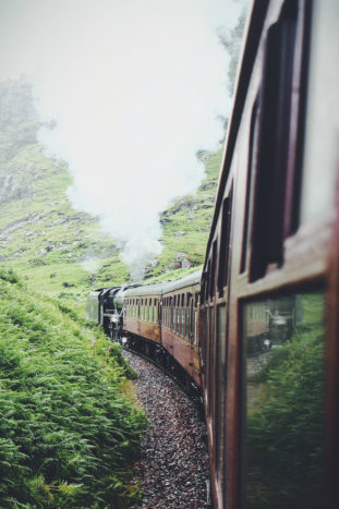 Forest Train