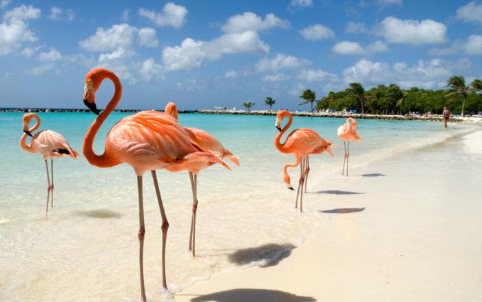 Aruba spiagge da sogni e relax