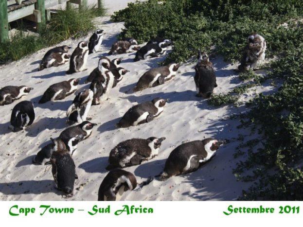 Ankiroa Viaggi Sud Africa