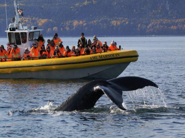 Balene sul fiume San Lorenzo