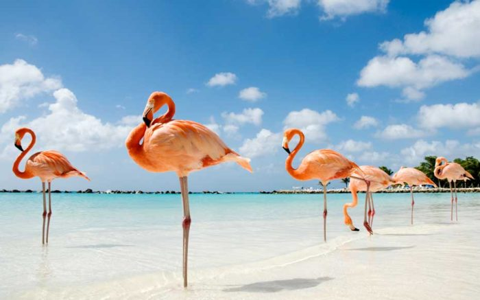 Flamingo's Beach - Aruba