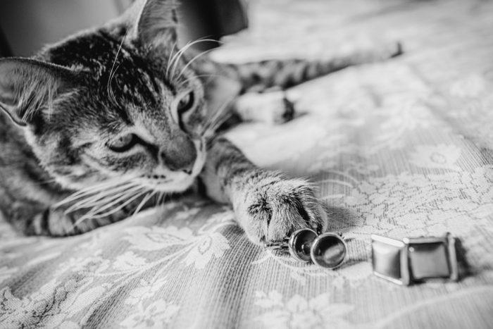 gatto con gemelli