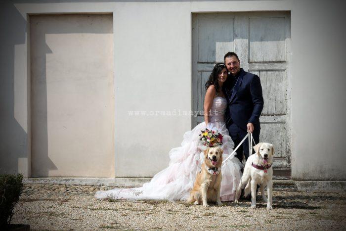 Wedding Pet Sitters